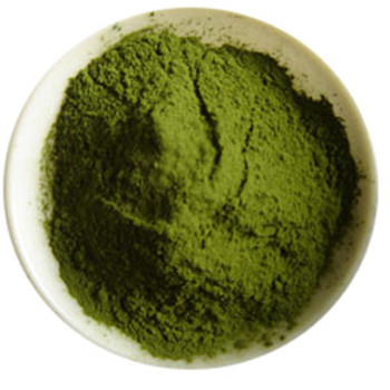 Wheat Grass Juice Powder/Extract